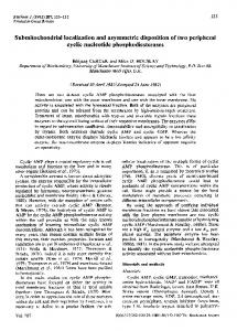 Submitochondrial localization and ... - Semantic Scholar
