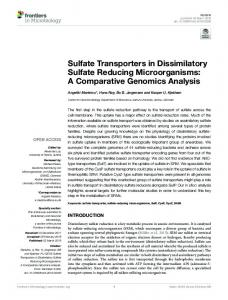 Sulfate Transporters in Dissimilatory Sulfate Reducing ... - PURE