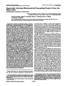 Superoxide Activates Mitochondrial Uncoupling Protein 2 from the