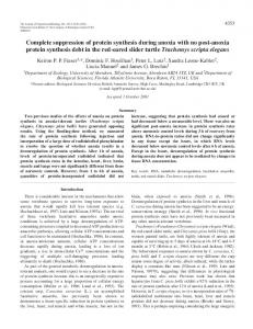 Suppression of protein synthesis during anoxia - Journal of ...