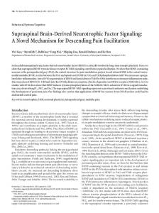 Supraspinal Brain-Derived Neurotrophic Factor ... - Semantic Scholar