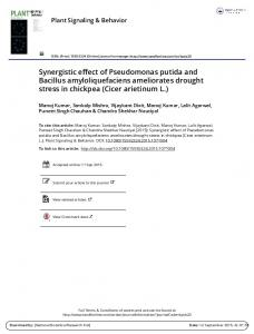 Synergistic effect of Pseudomonas putida and Bacillus