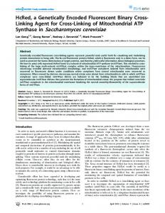 Synthase in Saccharomyces cerevisiae