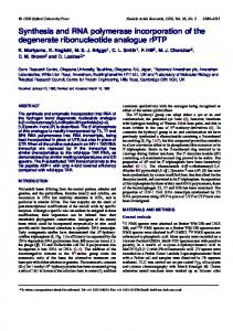 Synthesis and RNA polymerase incorporation of the ... - BioMedSearch