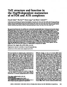 Tel2 structure and function in the Hsp90-dependent maturation of ...