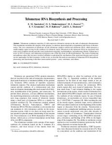Telomerase RNA Biosynthesis and Processing - Springer Link
