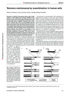 Telomere maintenance by recombination in human cells