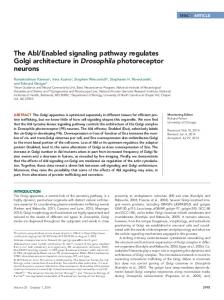 The Abl/Enabled signaling pathway regulates Golgi architecture in ...