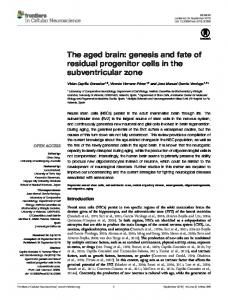 The aged brain: genesis and fate of residual progenitor ... - Frontiers