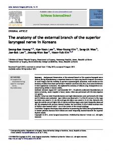 The anatomy of the external branch of the superior ...