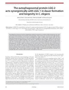 The autophagosomal protein LGG-2 acts synergistically with LGG-1 in ...