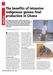 The benefits of intensive indigenous guinea fowl ... - WorldPoultry