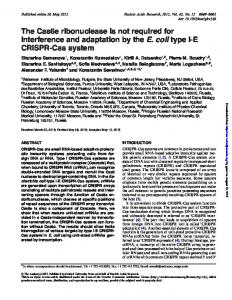 The Cas6e ribonuclease is not required for