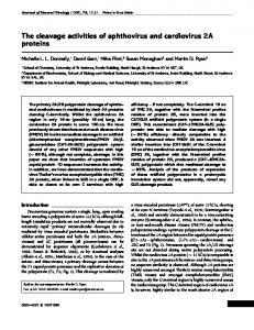 The cleavage activities of aphthovirus and ... - Semantic Scholar