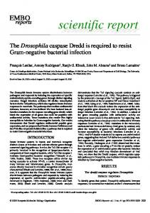 The Drosophila caspase Dredd is required to resist ... - Semantic Scholar