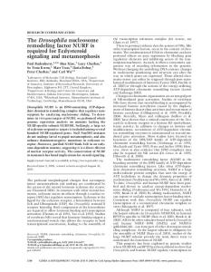 The Drosophila nucleosome remodeling factor NURF is required for ...