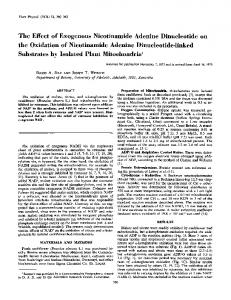 The Effect of Exogenous Nicotinamide Adenine Dinucleotide on the ...