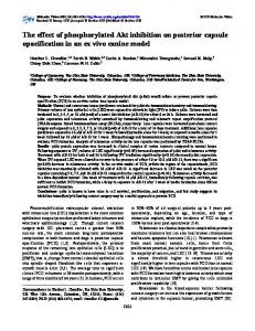 The effect of phosphorylated Akt inhibition on ... - Molecular Vision