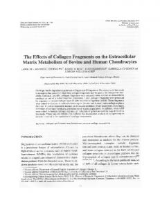 The effects of collagen fragments on the extracellular matrix
