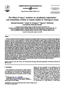 The effects of ropy-1 mutation on cytoplasmic ...