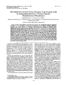 The Epidermal Growth Factor Receptor from Prostate Cells Is ...