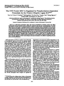 The ETS Protein MEF Is Regulated by Phosphorylation-Dependent ...