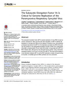 The Eukaryotic Elongation Factor 1A Is Critical for ... - Semantic Scholar