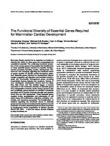 The functional diversity of essential genes ... - Wiley Online Library