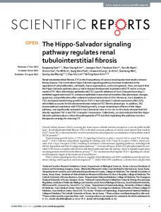 The Hippo-Salvador signaling pathway regulates ... - Semantic Scholar