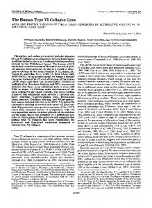 The Human Type VI Collagen Gene - The Journal of Biological ...