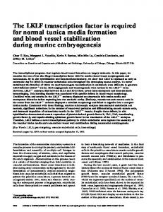 The LKLF transcription factor is required for normal tunica media ...