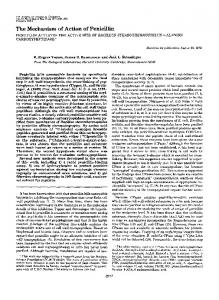 The Mechanism of Action of Penicillin - The Journal of Biological