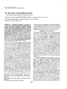 The Mechanism of Photoaffinity Labeling - Semantic Scholar