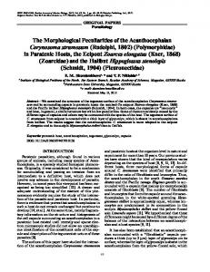 The Morphological Peculiarities of the ... - Springer Link