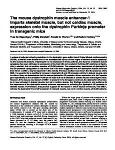 The mouse dystrophin muscle enhancer-1 imparts skeletal muscle, but