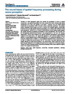 The neural bases of spatial frequency processing during ... - CORE