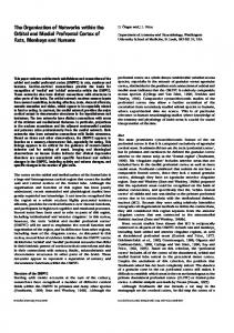 The Organization of Networks within the Orbital and Medial Prefrontal ...