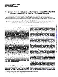 The Oxygen Tension Modulates Acetaminophen-Induced ...