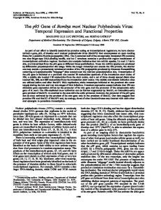 The p95 Gene of Bombyx mori Nuclear Polyhedrosis Virus: Temporal ...