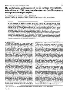 The partial amino acid sequence of bovine cartilage proteoglycan,