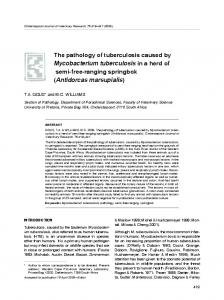 The pathology of tuberculosis caused by