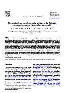 The peripheral and central antennular pathway of ... - Semantic Scholar