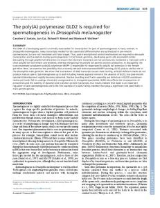 The poly(A) polymerase GLD2 is required for ... - Development