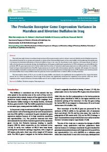 The Prolactin Receptor Gene Expression variance in