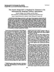 The Protein Kinase Snf1 Is Required for Tolerance to the ...