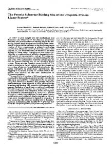 The Protein Substrate Binding Site of the Ubiquitin-Protein Ligase ...