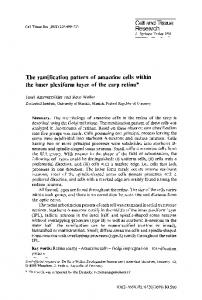 The ramification pattern of amacrine cells within the inner plexiform ...