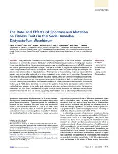 The Rate and Effects of Spontaneous Mutation on ...