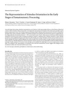 The Representation of Stimulus Orientation in the Early Stages of ...