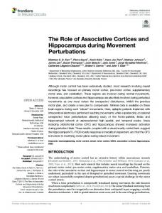 The Role of Associative Cortices and Hippocampus during ... - Frontiers